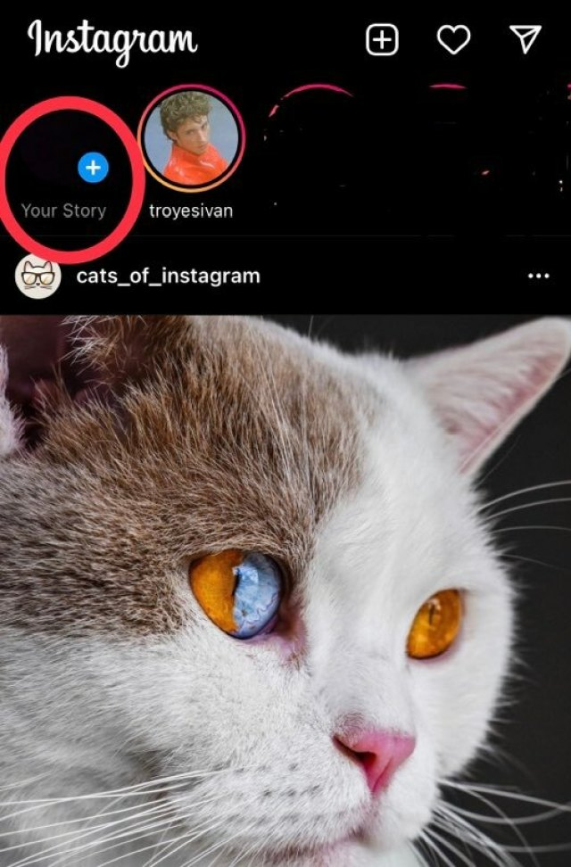 """Tap """"Your Story"""" to create a Story. Also, enjoy the Cats of Instagram post"""
