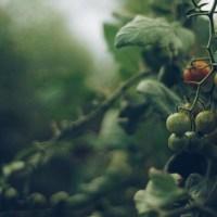 Τα φυτά μιλούν: Επιστήμονες κατέγραψαν για πρώτη φορά υπερήχους φυτών που διψούν ή πονούν