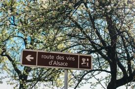 Route des Vins d'Alsace 5