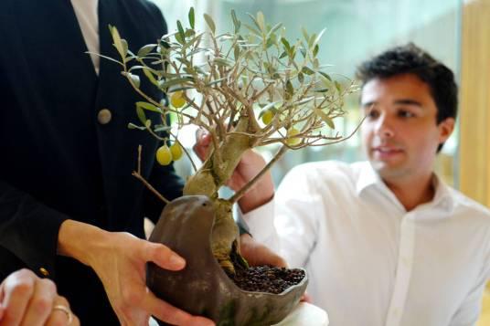 Grønn oliveniskrem. En klassiker som er like god hver gang.