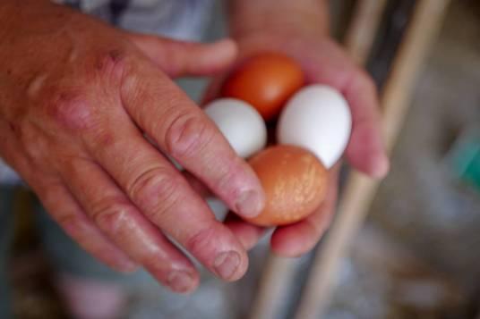 Nylagte egg