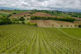 Abruzzo_wine_italianwine_helleskitchenL1680366