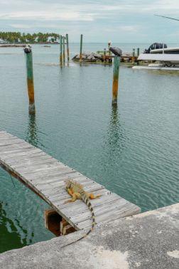 HelleValebrokk_Florida Keys_Florida_USA_Marathon_Key West_L1790510