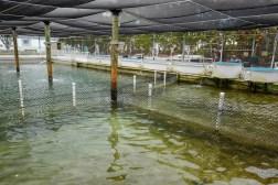 HelleValebrokk_Florida Keys_Florida_USA_Marathon_Key West_L1790511