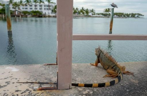 HelleValebrokk_Florida Keys_Florida_USA_Marathon_Key West_L1790520