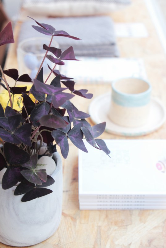 It-Plants Plantes Vertes Originales Oxalis // Hëllø Blogzine blog deco & lifestyle www.hello-hello.fr #oxalis