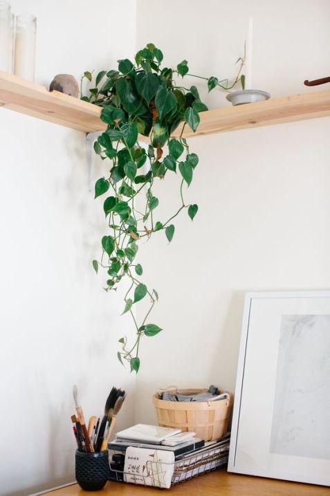 5 jolies plantes qui n ont pas besoin de lumiere ou presque