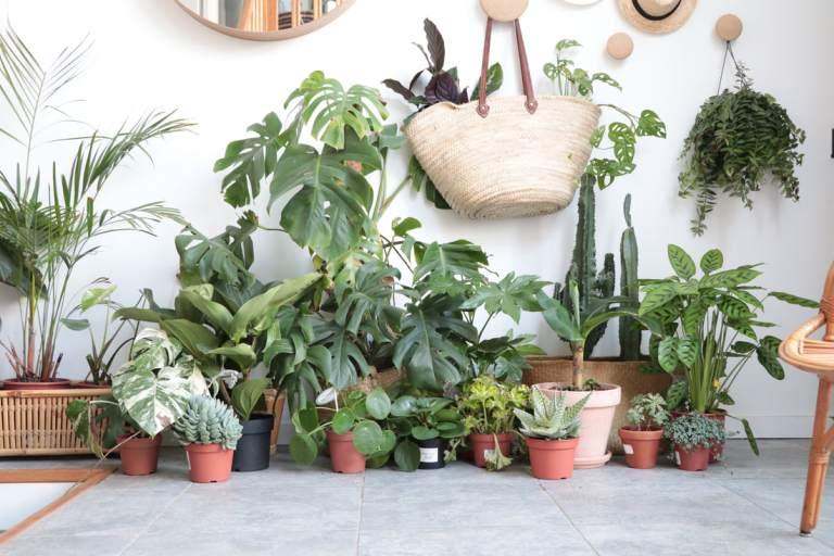 plante verte n'ayant pas besoin de beaucoup de lumiere