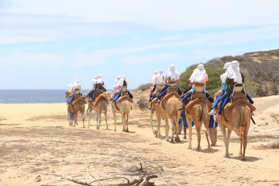 Did you know you could ride camels in Cabo, Mexico?