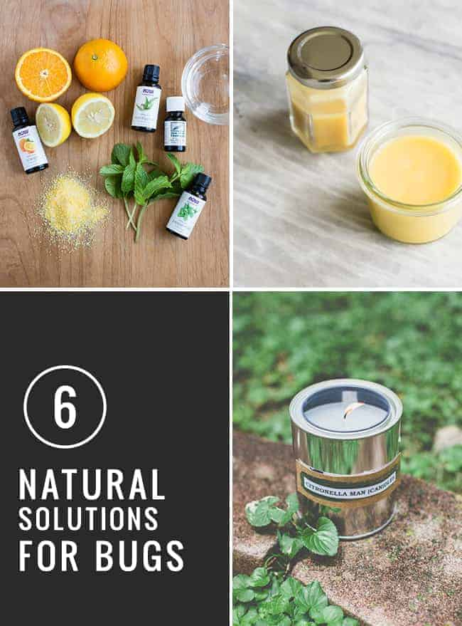 6 Natural Bug Solutions | HelloGlow.co
