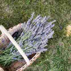 19 Everyday Uses for Our Favorite Essential Oil (Hint: It's Lavender)