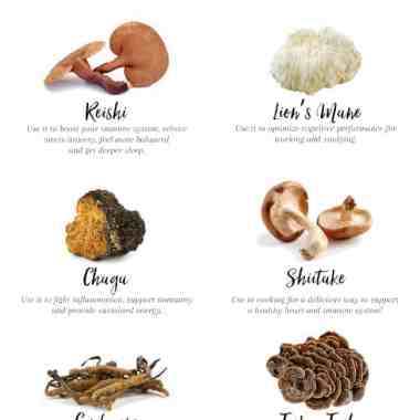 6 Medicinal Mushrooms + Their Amazing Health Benefits