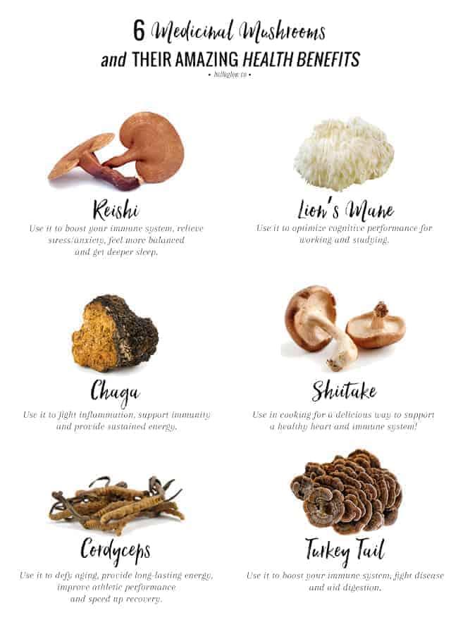 6 Medicinal Mushrooms + Their Amazing Health Benefits