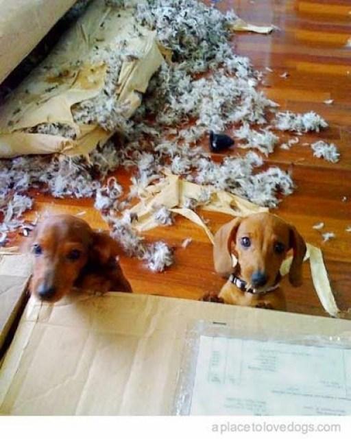 little dogs destroy furniture ww.roomsrevamped.com