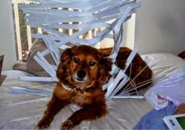 dog vs. blinds www.roomsrevamped.com