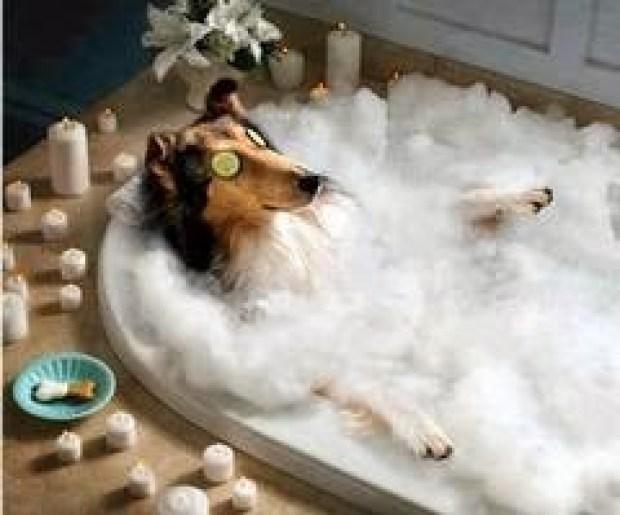 Dog taking a bath Rooms Revamped Interior Design