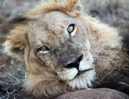 Travel: A Once in a Lifetime Safari at Motswari Game Lodge