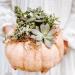 diy succulent pumpkin planters