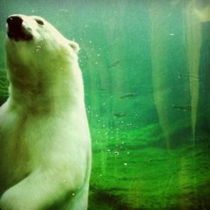 victoria plummer polar bear