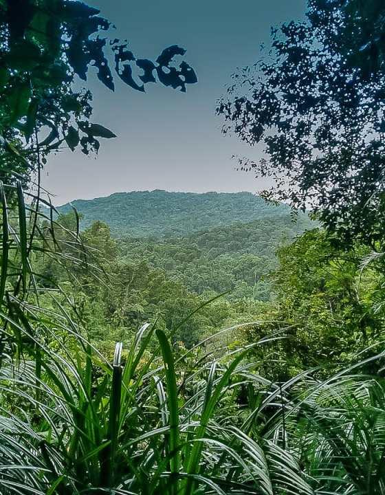 Escapade dans le Wooroonooran National Park #4