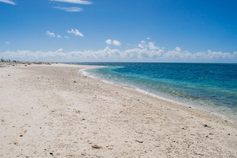 sable blanc de lady musgrave island