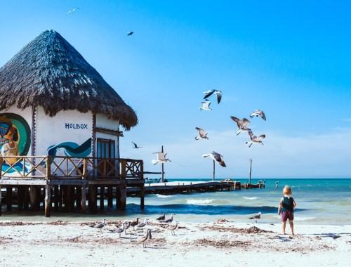 Mouettes sur la plage de Holbox