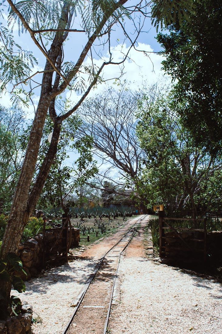 chemin de fer pour acheminer l'agave dans l'hacienda