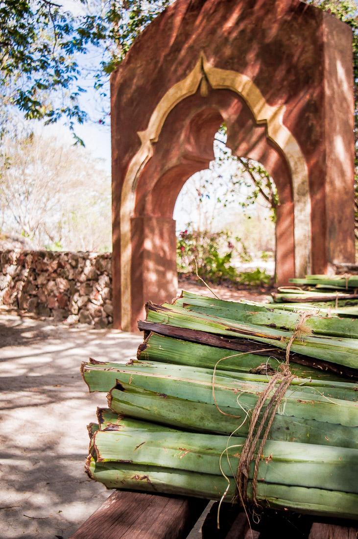 culture de l'agave dans l'hacienda Pedro de ochil