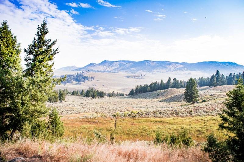 plaines de la Hayden Valley