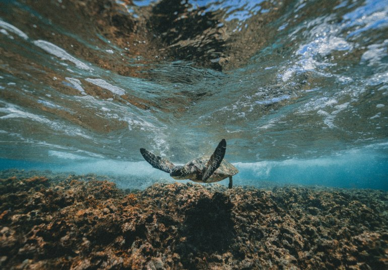 jakob-owens-300988-unsplash. sea turtle swimming near coral reef
