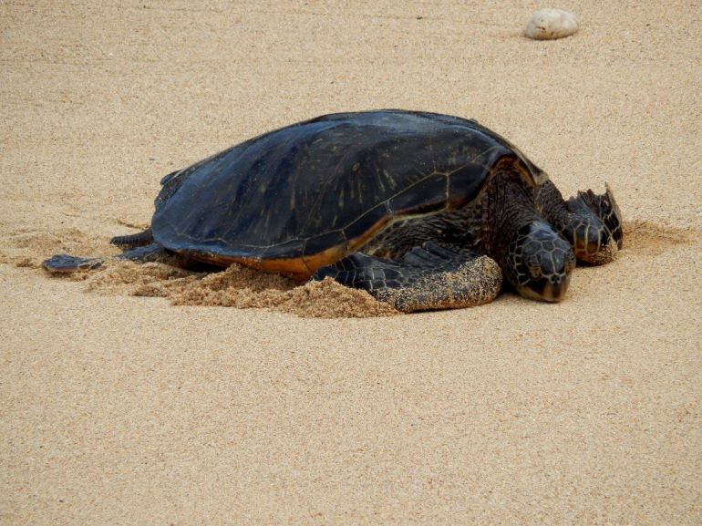sea turtle photo by Madeline Merlic