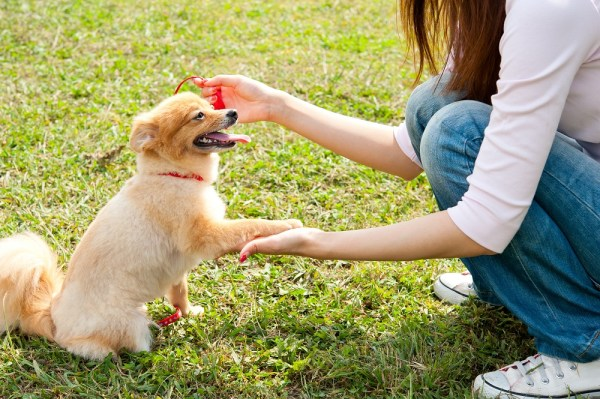 woman with dog in park during sunny day