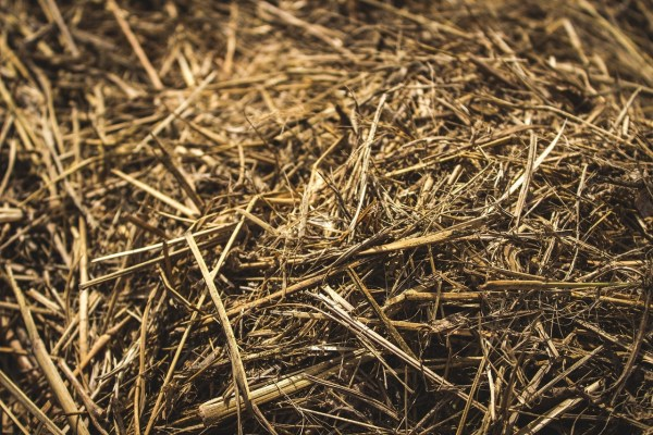 brown dry grass hay close up
