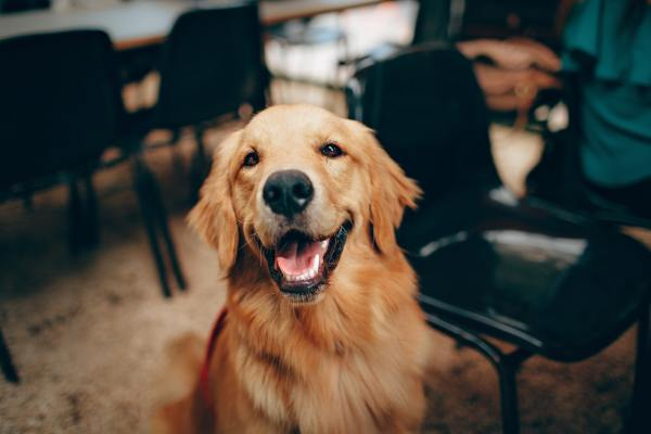 focus photography of happy dog