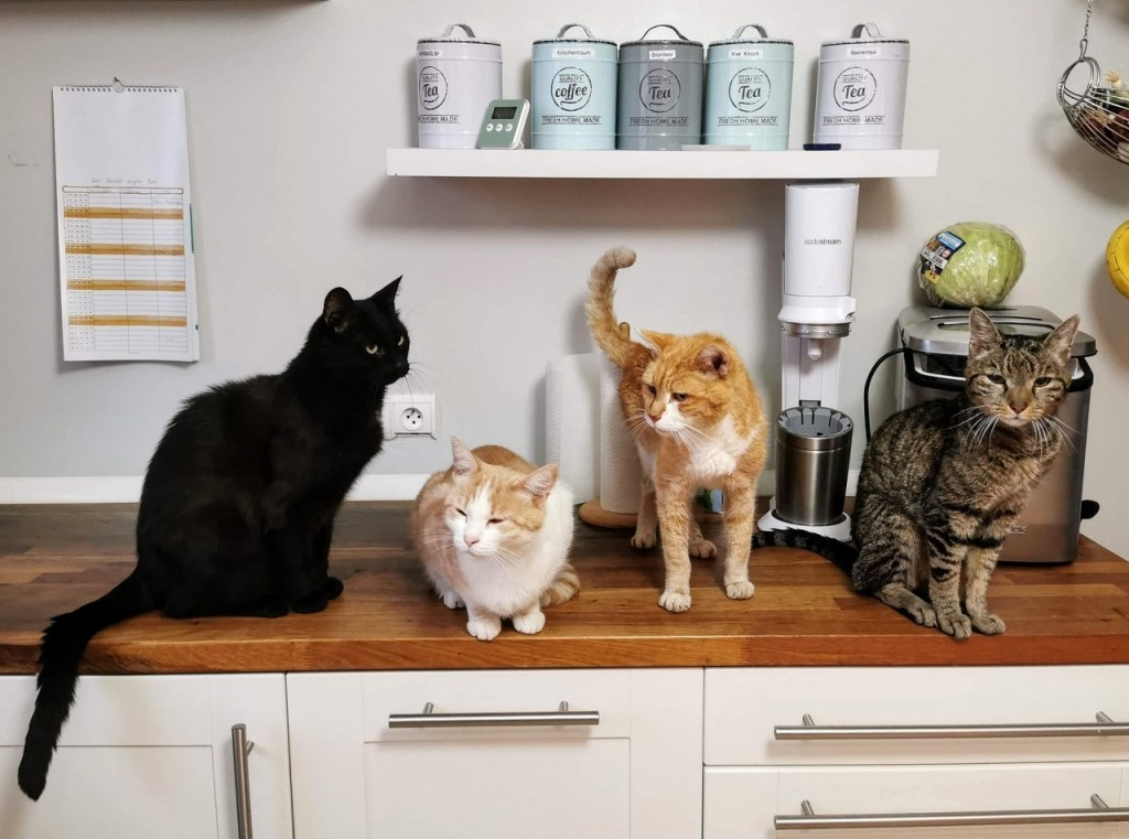 is lysol toxic to cats featured image