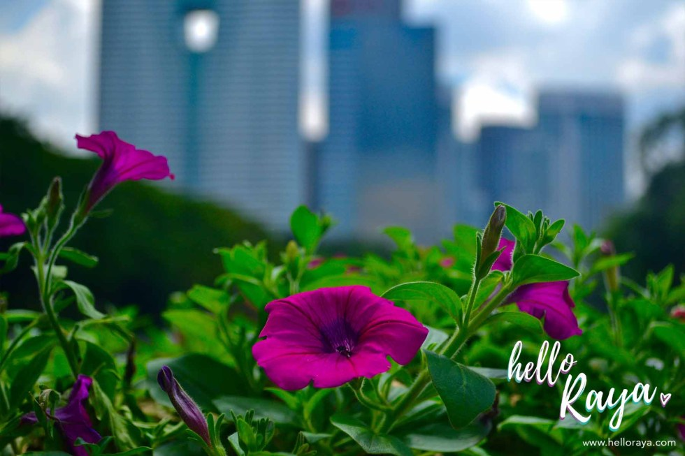 Nature in the Lake Gardens | Segway Tour in Kuala Lumpur | Hello Raya Blog