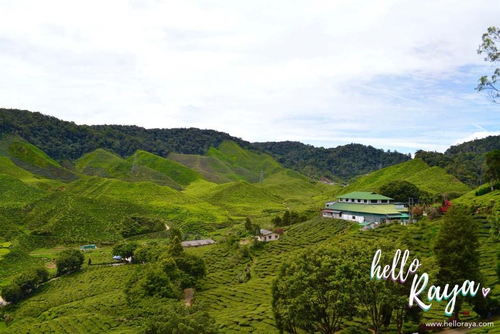 Road Trip Malaysia - Cameron Highlands | Hello Raya Blog
