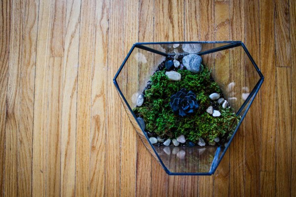 Terrarium Kit DIY 5
