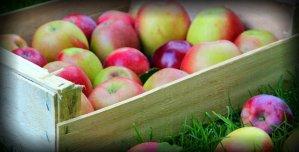 Fall Harvest four picks