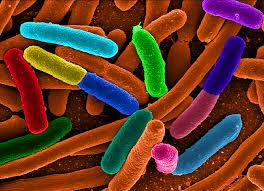Tea Can Fight Antibiotics Resistant Bacteria Such As E-Coli