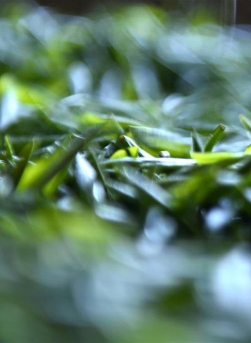 Green Tea Bags on Eyes: What Are The Benefits & Does it Work?