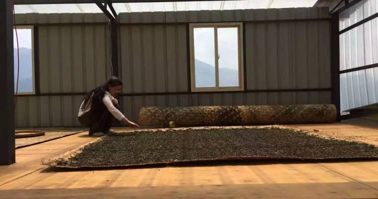 Pictures: Visiting Yunnan Tea Farms