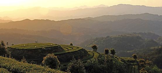Pu Erh Tea Mountains Map!