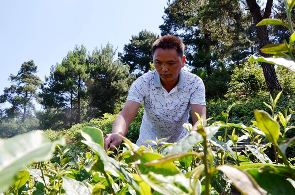 This Coal Mine Worker Is Now A Successful Tea Entrepreneur