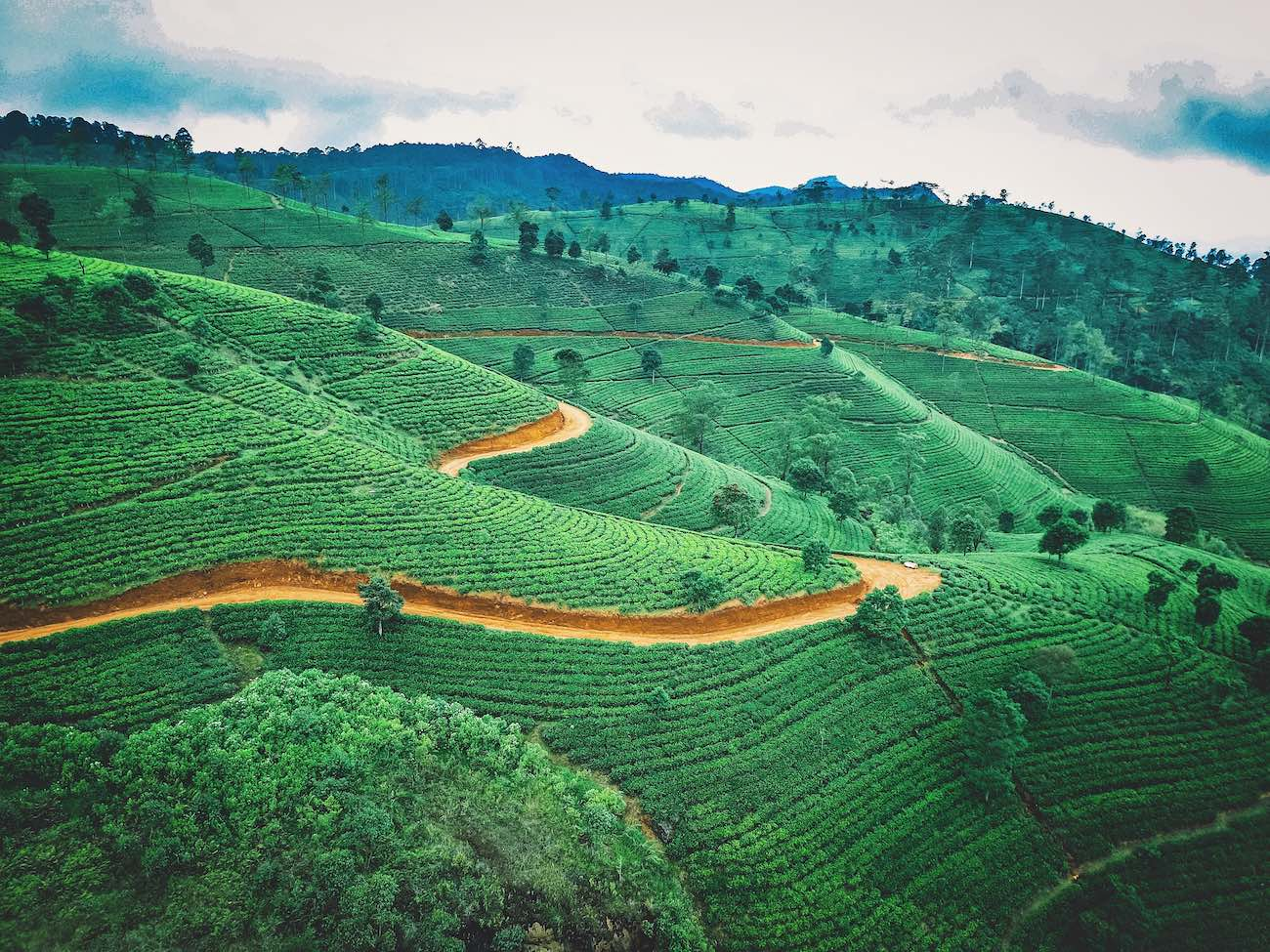 Sri Lanka Tea History: Discover Ceylon Tea Culture & Types
