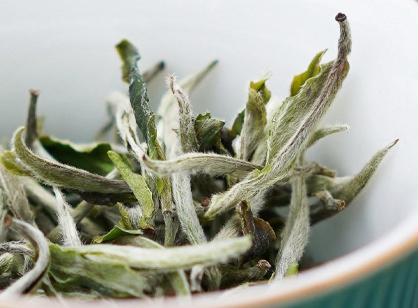 Bai mu dan popular chinese white tea