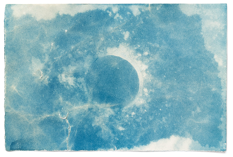 A cyanotype photogram