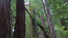 Redwood Nationalpark