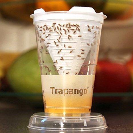 Trapango: Fruchtfliegen-Lebendfalle
