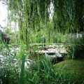 Seerosen in Giverny